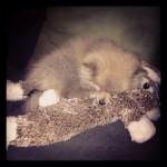 Dolly Bunny nap