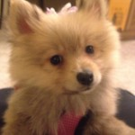 Dolly Parton - first day home - Jan 14 2013
