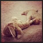 Dolly bunny